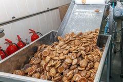 Roduction del pan di zenzero sul trasportatore del forno Immagine Stock Libera da Diritti