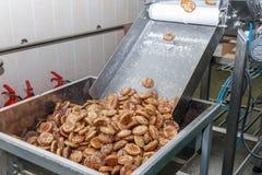 Roduction del pan di zenzero sul trasportatore del forno Immagini Stock