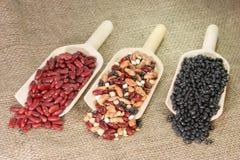 rodzaje różnych łopaty bean fotografia stock