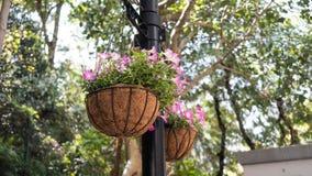 Rodzajowa Purpurowa obwieszenie roślina W parku obraz stock