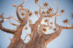 Rodzajowy kołczanu drzewa strzał od dynamicznego kąta Obraz Royalty Free