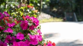 Rodzajowy Rodzajowy menchia kwiat W ogródzie obraz royalty free