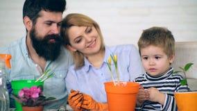 Rodzice w tła spojrzeniu przy chłopiec która zasadzał kwiaty w barwionych garnkach ogrodnik trochę Chłopiec z jego wychowywa zbiory