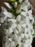 Rodzimi kwiaty Obrazy Stock