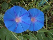 Rodzimy kwiat rodzimy las zdjęcia royalty free
