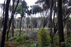 Rodzimy las Catlins przy Curio zatoką, Nowa Zelandia zdjęcie royalty free