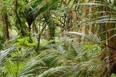 Rodzimy tropikalny las deszczowy przy Waitakere pasmami Obrazy Royalty Free