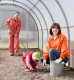 Rodzin loch ziarna przy szklarnią Obraz Royalty Free