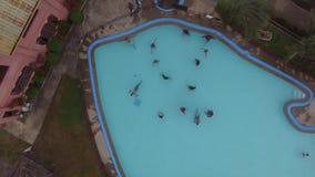 Rodzina cieszy się na ryba kształtował pływackiego basenu w miejscowości turystycznej zbiory wideo