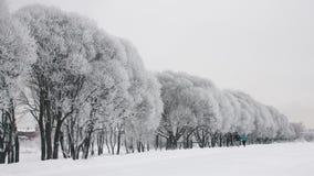 Rodzina jogging w zima parku zdjęcie wideo