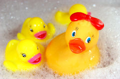 rodzina kaczek Zdjęcie Royalty Free