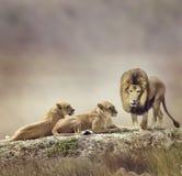 Rodzina lwy obrazy stock
