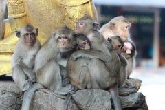 Rodzina makaki Fotografia Stock
