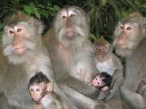 rodzina na bali Indonesia małpy w zoo obrazy stock