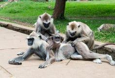 rodzina na bali Indonesia małpy w zoo Obrazy Royalty Free