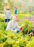 Rodzina podnosi marchewki w polu zdjęcie stock