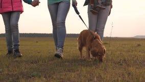 Rodzina podróżuje z psem przez pole Zako?czenie Mamy dziecko, córka i zwierzę domowe pies, turyści łączna praca a zbiory wideo