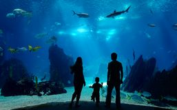 rodzina podwodna Zdjęcie Royalty Free