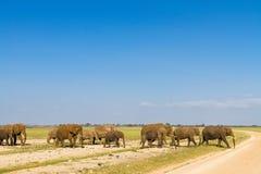 Rodzina słonie krzyżuje drogę Amboseli, Kenja Obraz Royalty Free