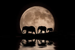 Rodzina słonie w blask księżyca sylwetce obrazy royalty free