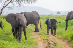 Rodzina słonie z dzieckiem Zdjęcia Royalty Free