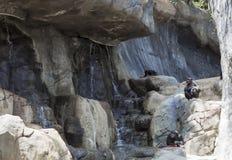 Rodzina szympansy w dzikim Zdjęcia Stock