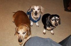Rodzina, zwierzęta domowe/ fotografia stock