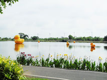 Rodzinna żółta kaczka na wodzie Zdjęcie Stock