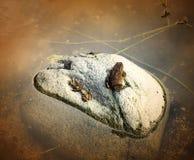 rodzinna żaba Obrazy Stock