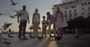 Rodzinni żywieniowi gołębie w ulicie przy zmierzchem zbiory wideo