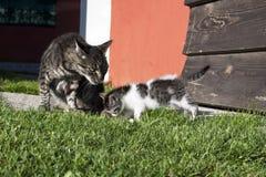 Rodzinny kot Zdjęcia Stock
