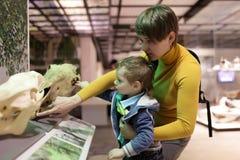 Rodzinny macanie czaszki zwierzęta Obrazy Stock