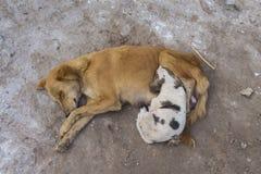 Rodzinny przybłąkany pies Obraz Stock
