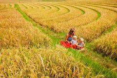 Rodzinny spacer w dojrzali ryż tarasujących polach Fotografia Royalty Free