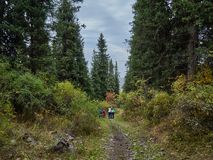Rodzinny spacer w drewnach fotografia stock