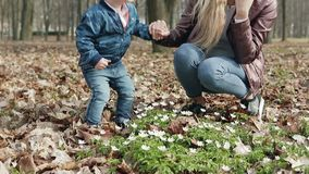 Rodzinny spacer w wiosna parku zbiory wideo