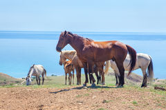 Rodziny grupa dzicy konie Obrazy Stock