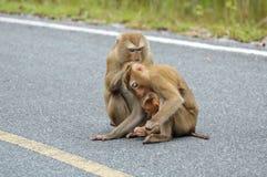 rodziny małpa Zdjęcia Royalty Free