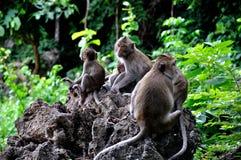 rodziny małpa Obrazy Royalty Free