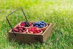 Rodzynek, malinka, agrest, czarna jagoda w ogródzie Obraz Stock