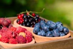 Rodzynek, malinka, agrest, czarna jagoda w ogródzie Obrazy Stock