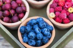 Rodzynek, malinka, agrest, czarna jagoda w ogródzie Fotografia Stock