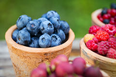 Rodzynek, malinka, agrest, czarna jagoda w ogródzie Zdjęcia Royalty Free