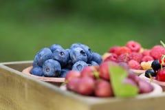 Rodzynek, malinka, agrest, czarna jagoda w ogródzie Zdjęcie Stock