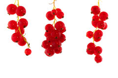 rodzynki czerwoni Fotografia Royalty Free