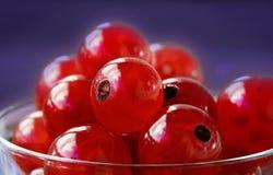 rodzynki czerwoni Zdjęcie Royalty Free