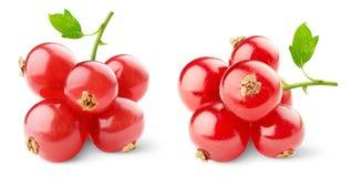 rodzynki czerwoni Obrazy Royalty Free