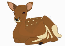 Roe deer lying Stock Images