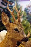 Roe deer portrait taxidermy Royalty Free Stock Photography