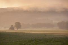 Roe-deer running in morning mist. Deer in field in the French Jura region in morning mist Royalty Free Stock Images
